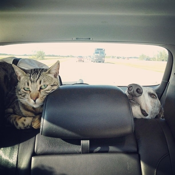 And when they're not showing off their napping skills, these two like to go on adventures. Who doesn't like a good road trip?