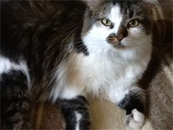 Pruitt missing in Centretown, near Preston and Somerset