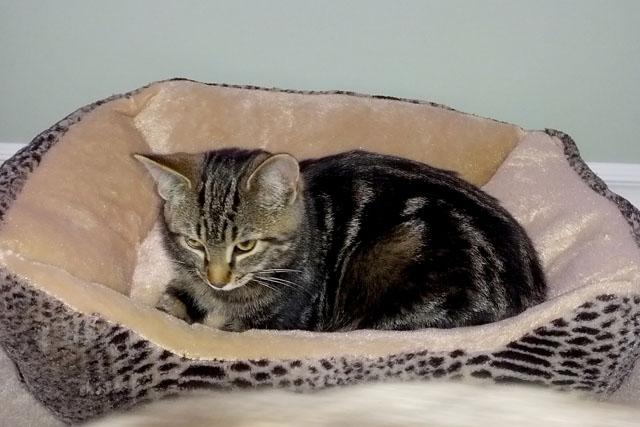 Ottawa Cat Rescue Groups