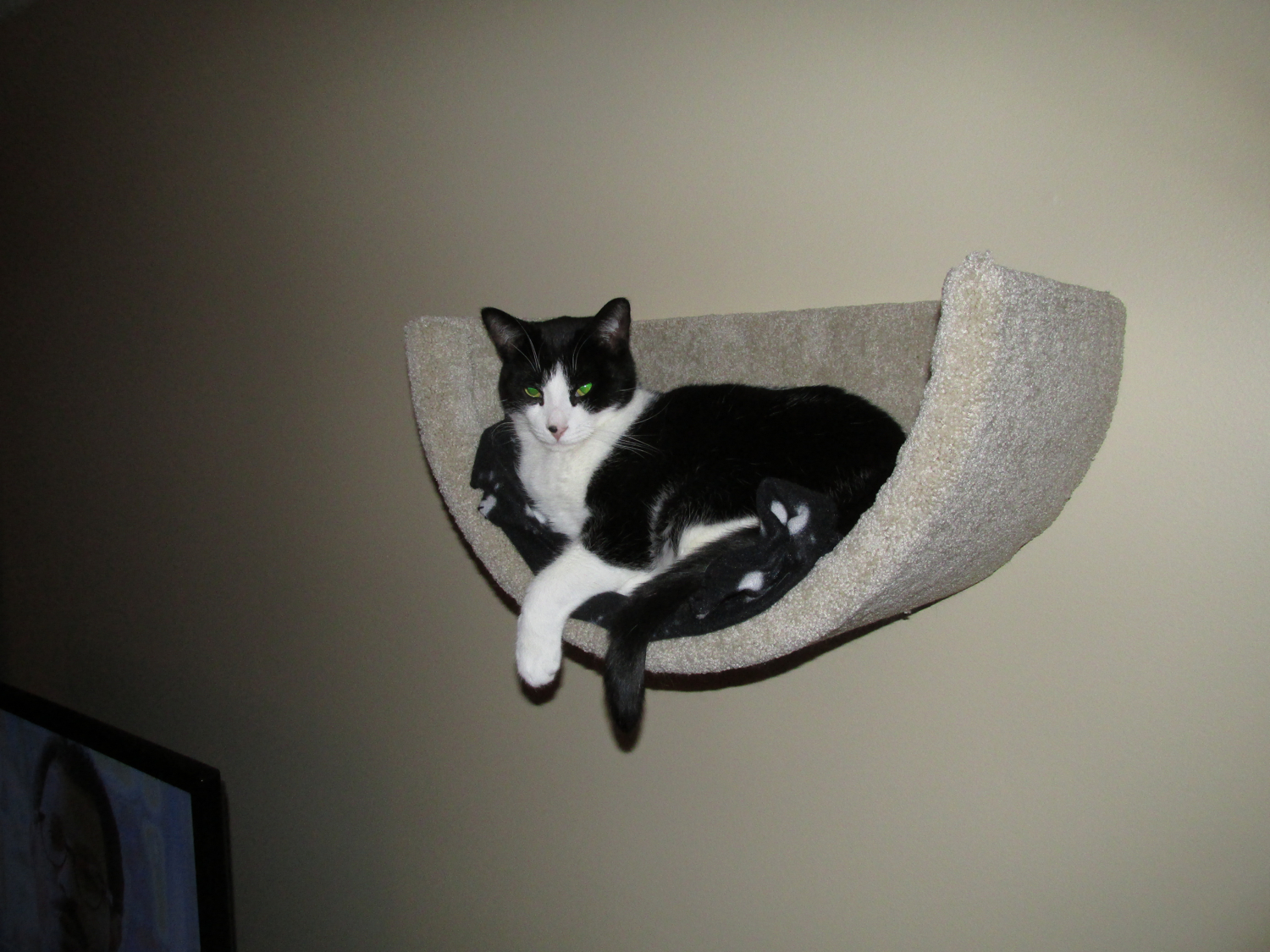Hungry and homeless cat rescue ottawa on cat trees for sale ottawa amipublicfo Image collections